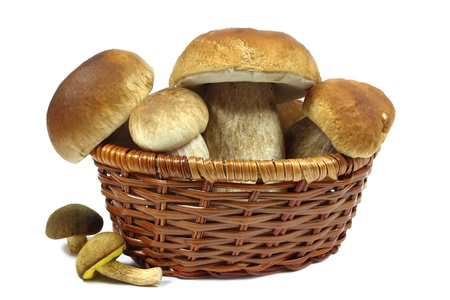 edulis: Mushrooms in a wooden basket  on white background.