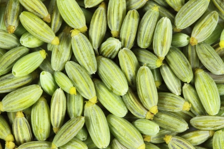foeniculum vulgare: Close up of  fennel seeds. Green background. Stock Photo