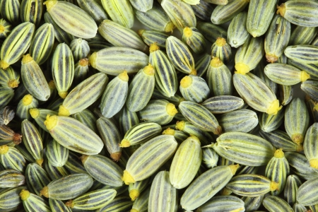 saunf: Close up of  fennel seeds. Green background. Stock Photo