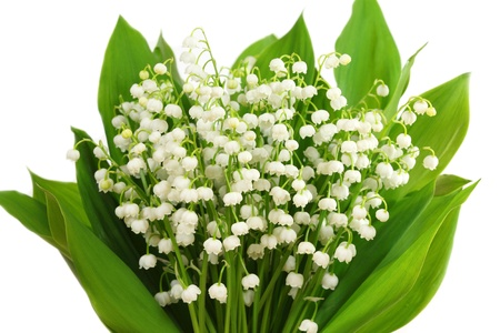 Bunch of white lilies. Lily of the valley. photo