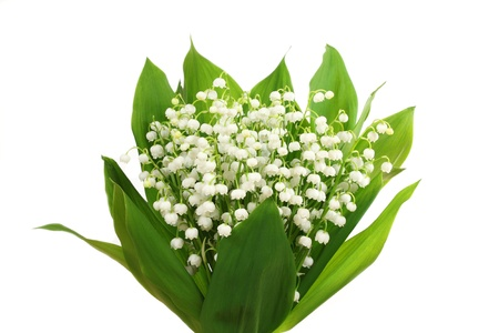 Bunch of white lilies. Lily of the valley. Stock Photo - 18090927