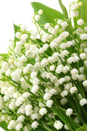 Bunch of white lilies. Lily of the valley. Stock Photo - 18090934