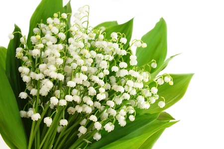 Bunch of white lilies. Lily of the valley.