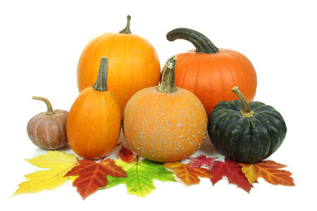 Various kinds of pumpkins isolated over white background