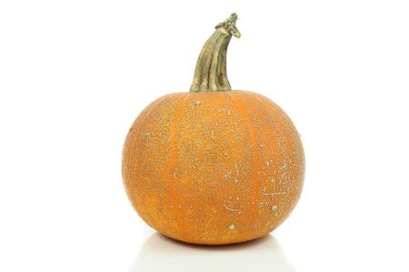 Pumpkin varieties Winter Luxury on a white background