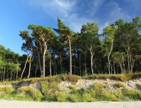cliff edge: Beautiful forest on the cliff edge  Blue sky and white clouds  Stock Photo