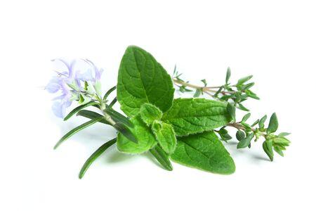 oregano plant: Oregano, thyme and rosemary on a white background