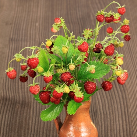 strawberry plant: Wild strawberries - beautiful natural fruit. Square compositin.