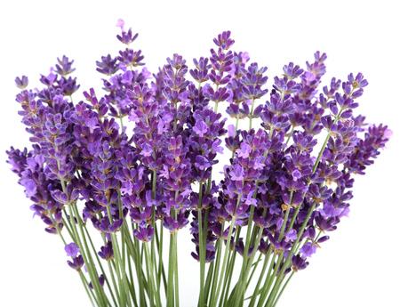 Stelletje lavendel op een witte achtergrond