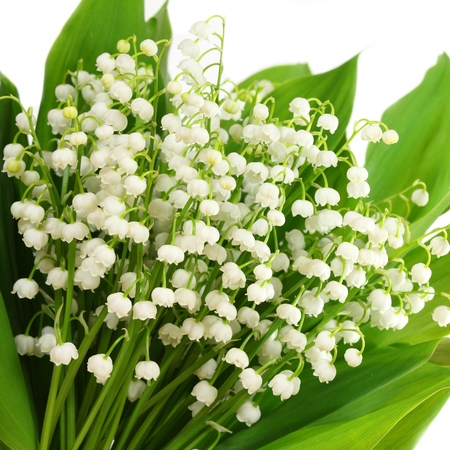 square composition: Bunch of white lilies. Lily of the valley. Square composition.