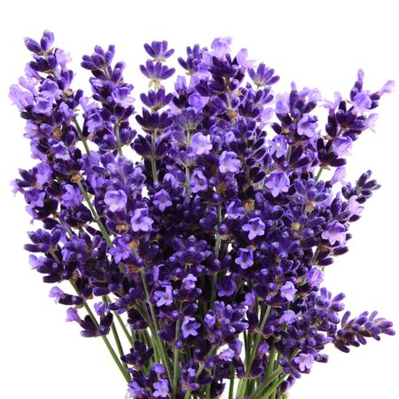square composition: Lavender flowers against white background. Isolated object.  Square composition. Stock Photo