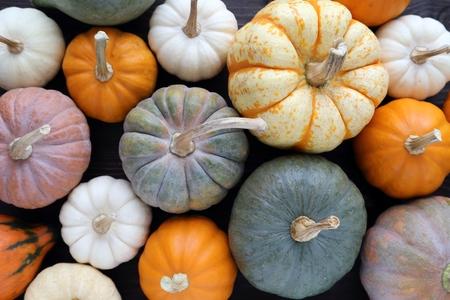 dynia: Zróżnicowany asortyment dynie na tle drewnianych. Jesienią zbiorów.