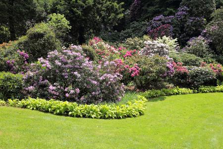 Piękne rododendron kwiatów krzewów i drzew w ogrodzie Krajobraz Zdjęcie Seryjne
