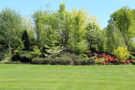 Colored trees and shrubs in the garden in the spring. Stock Photo