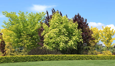 shrubs: Colored trees and shrubs in the garden in the spring. Stock Photo