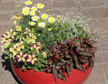 Potted plants: Ceramic flower pot with a decorative flower arrangement.