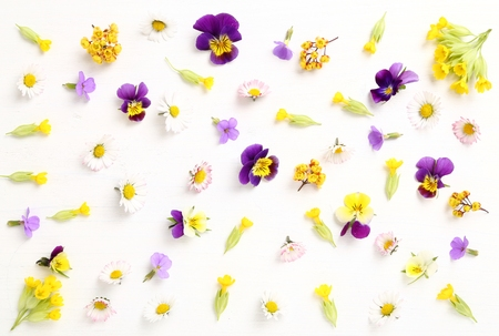 scattered: Beautiful colorful spring flowers on a white background.