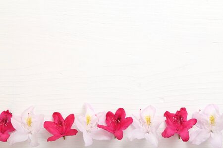 azaleas: Frame with flowers on white  wooden background.