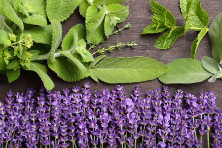 herbary: Lavender flowers and aromatic green herbs.