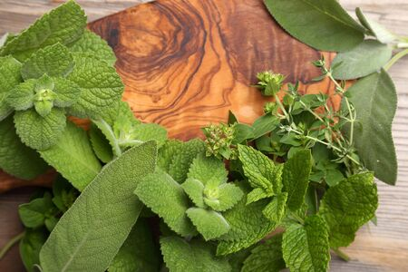 herbary: Aromatic green herbs and spices on a wooden background.