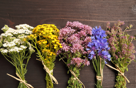 herbary: Different types of fresh herbs on a wooden table. Stock Photo