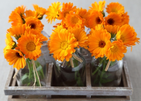 edible plant: Bouquets of flowers of calendula in glass bottles.
