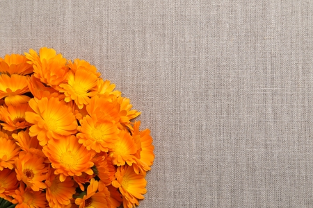 edible plant: Orange flowers of marigolds on the background of natural linen fabric.