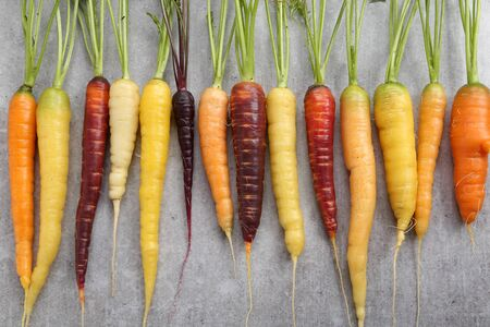 ingradient: Colorful carrots on a gray ceramic background. Stock Photo