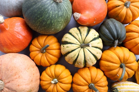 Autumn harvest, colorful pumpkins on a gray ceramic background.