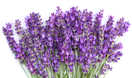 Bouquet of lavender  on a white  background. 免版税图像