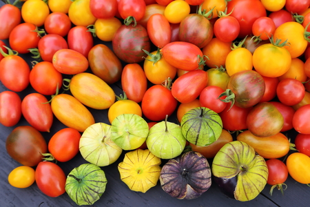 Colorful tomatoes and tomatillo on wooden board. Reklamní fotografie