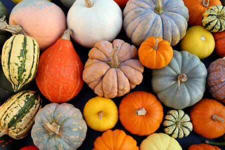 Otoño cosecha calabazas de colores y calabazas en diferentes variedades. Foto de archivo