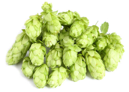 Hop cones on a white background.