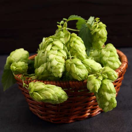 Hop cones in a wicker basket on a black background.