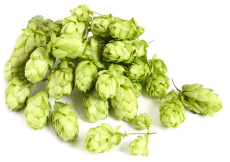 Aromatic green hop cones on a white background.