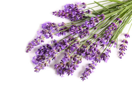 Blooming lavender on a white background. Top view.