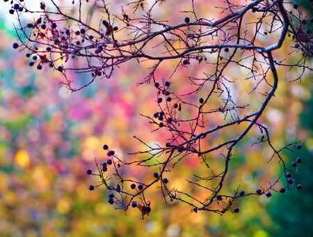 Tree brunches against multi-colour leaves and trees