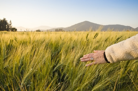 Woman feeling peaceful and dragging her hand across the field photo