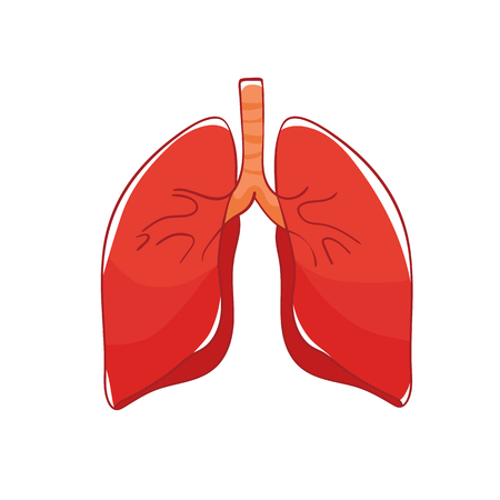 Vector lungs on white background. Doodle human organ.