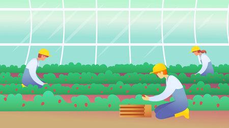 Workers harvest strawberries. Seasonal work. Harvesting. Agricultural work. Ilustrace
