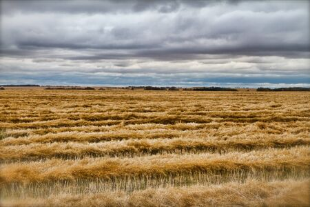 recently: A recently harvested field underneath a late afternoon sky  Stock Photo