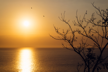 Sunrise over the sea in autumn. In the foreground the branches of a tree, in the background the sun and the silhouettes of birds.