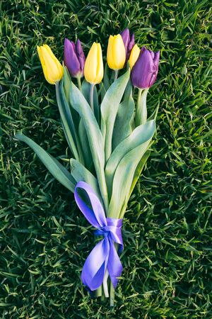 tulips in green grass: Bouquet of yellow and purple tulips on green grass closeup