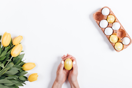 Top view of female hands holding yellow Easter egg near tulips on white background