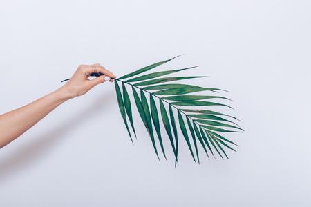 Vrouwelijke hand met witte manicure houdt een tak van een palmboom op een witte achtergrond Stockfoto