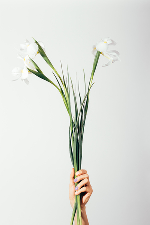 Bouquet of white irises with long stems in a female hand, vertical framing