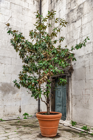 Paved corner of a Venetian courtyard with a green plant in a clay pot