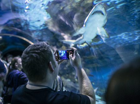 People observing and shooting fish at the aquarium at the Budapest, Hungary