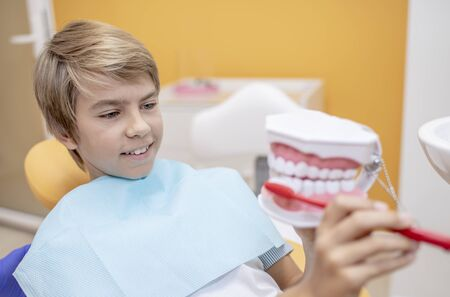 Boy learning to brush his teeth using a model of human jaws