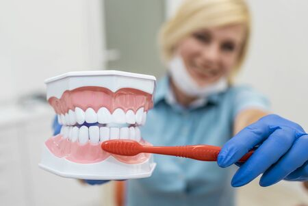 Closeup of smiling dentist showing the right way to brush teeth